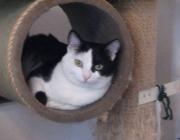 Katzen - Die Katzen (Felidae) sind eine Familie aus der Ordnung der Raubtiere (Carnivora) innerhalb der Überfamilie der Katzenartigen (Feloidea).
