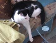 Katzen - Sie sind ihre eigenen Herren, sind selbstbewusst, beeindrucken durch ihren königlichen Stolz und ihr Ruhen in sich selbst.