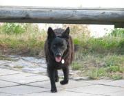 Mudi - Ein Mudi ist ein lebhafter und energischer Hund, der gerne etwas unternimmt.