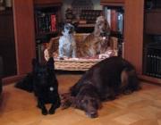 Hundegruppe - Größere Tiergemeinschaften verschaffen dem Einzelnen Vorteile im Zusammenleben.