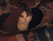 Kater - das männliche Tier bei Arten aus der Familie der Katzen.