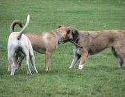 Canidae (Hundeartige) - Hunde sind in ihrer Anatmonie perfekt an die Verfolgung schneller Beutetiere in weiten Landschaften angepasst.