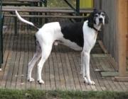 Canidae (Hundeartige) - Die Raubtiere (Carnivora) sind eine Ordnung der Säugetiere (Mammalia), welche die Hundeartigen (Canoidea) und die Katzenartigen (Feloidea) einschließt.