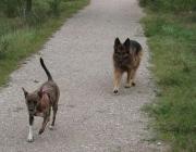 Hunde Kommunikation - Ein Hund aus Österreich versteht seinen Freund aus Italien sofort. Nur wir Menschen verstehen diese Sprache oftmals nicht.