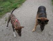 """Hunde Kommunikation - """"Der Hund ist das einzige Lebewesen auf der Erde, das Sie mehr liebt, als sich selbst."""" (Josh Billings)"""