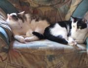 Katzen Verhalten - Oftmals verfällt man der Annahme, dass Katzen Einzelgänger wären.