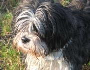Hunde Verhalten - Jede unserer Gesten, jeder Blick und jede Bewegung von uns hat im Dialog mit unseren Hunden eine Bedeutung.