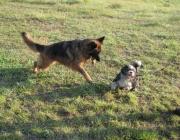 Hunde Verhalten - Der Hund ist von Natur aus kein Einzelgänger, sondern für das Leben in einem Familienverband dem Rudel geschaffen.