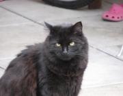 Schwarze Katzen - Sehr viel später, genauer gesagt im Mittelalter und zu Zeiten der Hexenverfolgung setzte man in der Beurteilung der schwarzen Samtpfoten noch eins drauf, indem man sie zu Gehilfen des Teufels und zu Gefährten von Hexen erklärte.