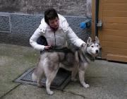 Hund und Mensch - Der Hund braucht das Gefühl, beim Menschen Schutz zu finden, wenn er ihn als Leitfigur anerkennen und sich im Miteinander nach ihm ausrichten soll.