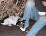 Hund und Mensch - Heute halten die meisten Menschen Hunde nicht mehr wegen der Dienste, die dieses Tier erledigen kann, sondern als Familien- und Begleithund.