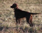 Sprache der Hunde - Hinzu kommt, dass viele Hundehalter ihre Hunde vermenschlichen. Sobald Sie bereit sind, genau umgekehrt zu handeln, sind Sie auf dem richtigen Weg.