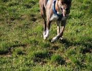 Verhalten der Hunde - Hunde sind von Natur aus Jäger und Beutetierfresser. Allerdings zeigen sie in der Wildnis oft eine erstaunliche Anpassungsfähigkeit.