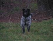 Mythos Hund - Der Hund wird zum Todesboten, zum Hellseher, zum Opfertier und zum Mondtier, zum Unterweltwächter, zum Begleiter der Hexen und Dämonen. Oft kommen die Spukgestalten der Nacht in Form von Hunden. Und doch ist und bleibt der Hund das Tier der alten Göttinnen, denn wir finden ihn vor allem an der Seite der Diana, der Holda und der Hel, der Artemis, der Hekate und der Nehalennia. So ist die Kombination Hund und Göttin eine sehr alte.