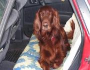 Hundemimik - Für manche Hunderassen ist auch der Mensch ein überaus wichtiger Sozialpartner.