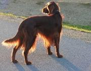 Hunde Gestik - Viele dieser Gesten und Lautäußerungen nutzen Hunde noch heute um mit Ihresgleichen zu kommunizieren.