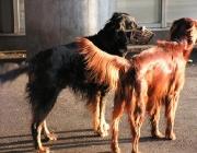 Körpersprache des Hundes - Hunde verständigen sich untereinander durch verschiedene Signale.