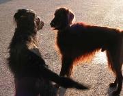 Körpersprache des Hundes - Dazu gehört eine Vielzahl von unterschiedlichen Gesichtsausdrücken, Körperhaltungen, Lauten und Gerüchen.