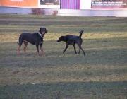 """Hunde Gestik - Was ihre Herrchen und Frauchen dabei häufig vergessen: """"Waldi"""" und """"Fiffi"""" haben auch mimisch und gestisch einiges zu sagen."""