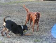 Hunde Gestik - Um sich ihrer Umwelt lautlos mitzuteilen, benutzen Hunde zwei verschiedene Arten der Kommunikation: Gestik und Mimik.