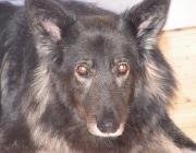 Blicke des Hundes - Die Sehschärfe des Menschen ist nahezu sechsmal besser als die des Hundes.