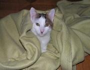 Katzen Verhalten - Eines der häufigsten Probleme mit Katzen ist Unsauberkeit. Im überwiegenden Teil der Fälle hat das keine organischen Ursachen, und niemals ist das als Boshaftigkeit auszulegen.