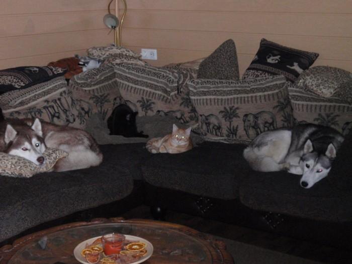 canidae hundebetreuung wien dogwalker hundesitting. Black Bedroom Furniture Sets. Home Design Ideas