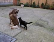 Hunde - Katzen / Am einfachsten ist es, wenn zwei Jungtiere miteinander aufwachsen. Wenn aber einer schon im Haus ist und der andere dazu zieht, wird von Herrchen und Frauchen viel Einfühlungsvermögen verlangt.