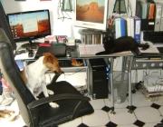 Hund - Katze / Wenn Hund und Katz die Führung übernehmen,