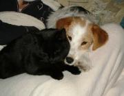Hunde - Katzen / Es gibt für eine gemeinschaftliche Haltung von Hunden und Katzen leider -wie überall im Leben eben kein