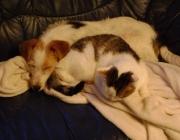 """Hunde - Katzen / Es gibt keine angeborene Feindschaft zwischen Hund und Katze. Nur ein massives Verständigungsproblem. Wenn der eine sagt: """"Schön, dich zu sehen"""