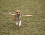 Hunde Betreuen - Hundesitting, Tierbetreuung