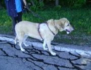 Hundebetreuung Wien - Dog Walking