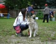 Hund - Mensch / Über die Pflichten, Aufgaben und Verantwortung, die jeder für sein Tier übernommen hat, überwiegt doch immer die Wärme und Freude, die es täglich und ohne Gegenleistung zu verlangen, in unser Leben bringt.