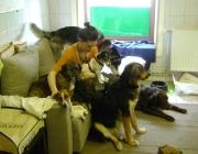 Hund - Mensch / Das stark entwickelte Ausdrucksverhalten des Hundes zeigt dem Menschen Emotionen, die dieser verstehen und zuordnen kann.