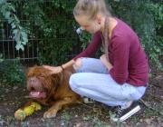 Hundebetreuung Wien - Hunde und Menschen