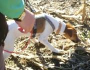 Training mit dem Hund - Nasenarbeit