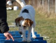 Hundetraining - Rettungshundetraining