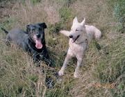 """Hunde (Canidae) - Der Hund kann in kurzen Atemzügen bis zu 300 mal in der Minute atmen, so dass die Riechzellen ständig mit neuem """"Material"""" versorgt werden."""