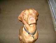 Magyar Vizsla - Der Magyar Vizsla (in Lautschrift [ˈmɒɟɒr ˈviʒlɒ] (ungarisch), /ˈmɑdjɑr ˈviʒlɑ/ (vereinfacht)) wurde Anfang des 20. Jahrhunderts aus vorhandenen gelben Jagdhunden in Ungarn geschaffen. Die gelbe Farbe ist wohl insbesondere auf den Einfluss des gelben Türkischen Vorstehhundes zurückzuführen.