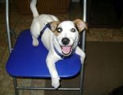 Hunde (Canidae) - Einiges ist allen gemeinsam: lange, schmale Köpfe mit langen Kiefern und vielen Zähnen.