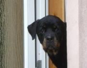 Tierbetreuung Wien - Betreute Hunde