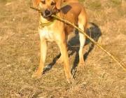 Hunde (Canidae) - Die Leistungsfähigkeit des Ohrs ist hoch entwickelt. Es kann höhere Frequenzen wahrnehmen als das des Menschen.