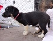 Hunde (Canidae) - Die beweglichen Ohrmuscheln des Hundes lassen ihn Geräuschquellen zudem besser dreidimensional orten als ein Mensch das könnte.