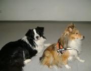 www.HUNDEBETREUUNG.co.at - Hunde Fotos