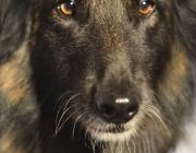 www.HUNDEBETREUUNG.co.at / Portrait von Hunden