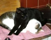 Katzenbetreuung Wien - Katzenliebe / Durch Kämpfe untereinander legen Kater ihre Hierarchie fest.