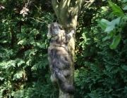 Katzenbetreuung Wien - Katze auf Baum / Katzen klettern auf Bäume um dort die Aussicht zu genießen, sie versuchen Vögel zu fangen und retten sich vor frei laufenden Hunden.
