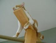 Katzenbetreuung Wien - Katzen Bewegung / Die Bewegungen einer Katze sind ebenso anmutig wie präzise.