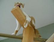 Katzenbetreuung Wien - Katzen Bewegung / Egal, ob sie vom Jagdtrieb erregt ist, routiniert in ihrem Revier patrouilliert oder seelenruhig von einem warmen Plätzchen zum nächsten schlendert, sie setzt ihre Muskeln unglaublich sparsam, effizient und elegant ein.